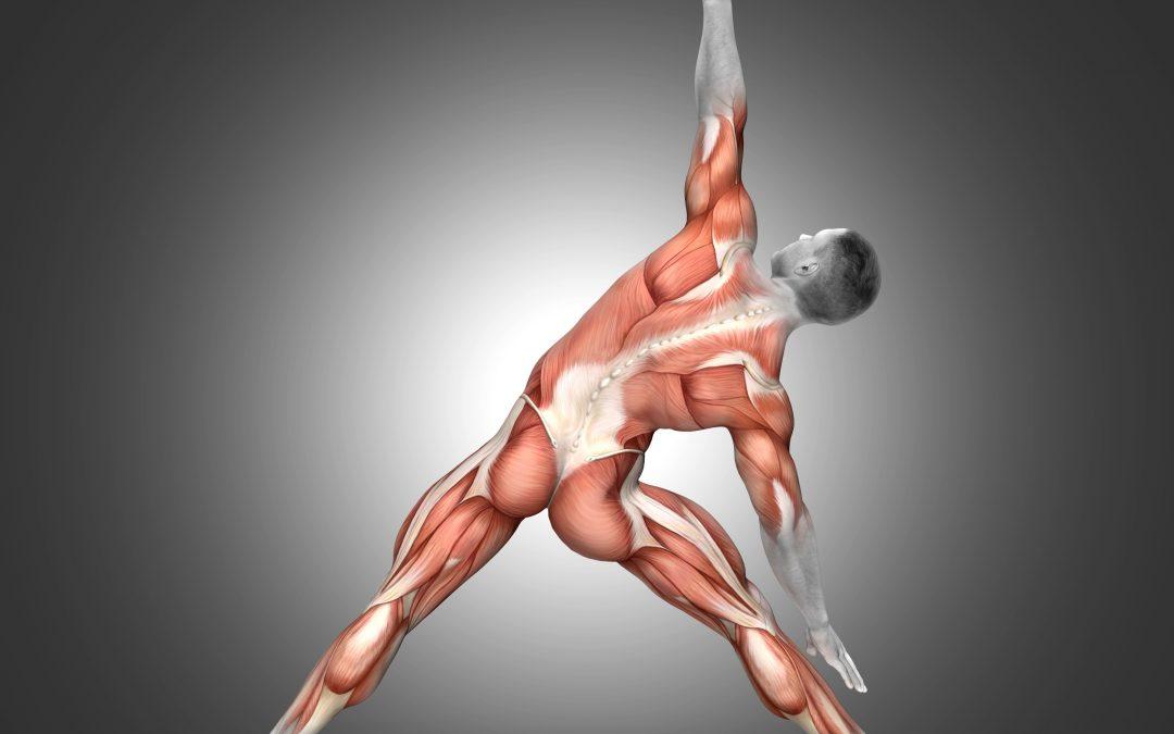 La importancia de los estiramientos musculares en la fisioterapia